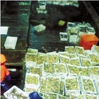 浙江一渔民出海十天捞万斤小黄鱼 价值近60万元