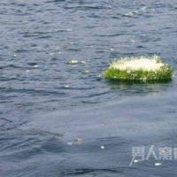 北京首推骨灰免费自然葬 让逝者魂归大地入土为安