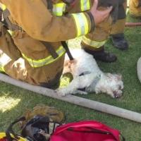 从火场中救出狗狗 苏醒的那一刻大家都喷泪了